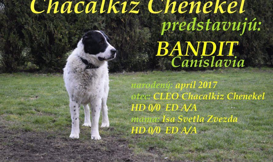 Bandit Canislavia, 2,5 roka