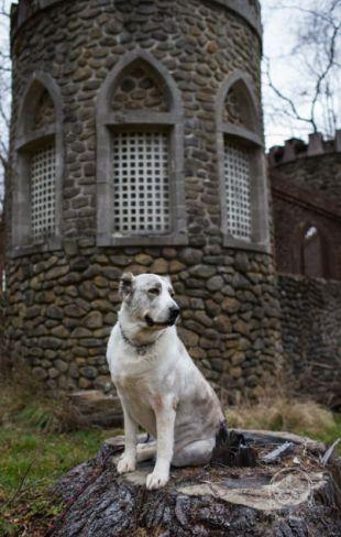 """Pozdrav od Fergie """"Zivy"""" zo zakliateho zámku!"""